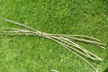 Fresh willow withies. Historic Gardener