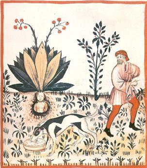Mandrake 1